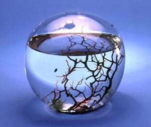 Ecosphere, clear glass sphere about two-thirds fill of water, with pebbles in the bottom, algae, reef-like skeleton, and tiny red shrimp.