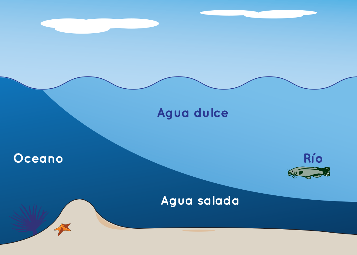 Drawing shows cross-section of saltwater layered below fresh water.