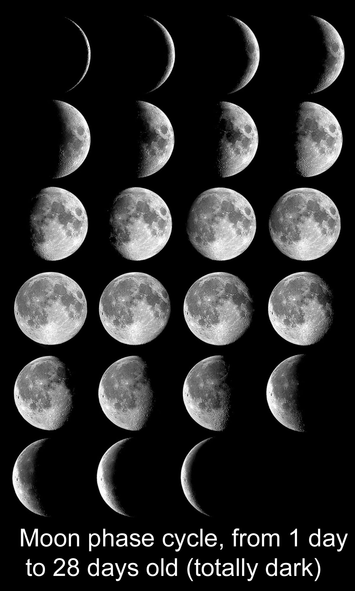 The Moons Phases In Oreos Nasa Space Place Lunar Diagram Montage Of Photos Moon Each Night For One 28 Day Cycle