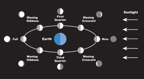 This graphic shows all eight moon phases we see as the Moon makes a complete orbit of Earth about every four weeks.