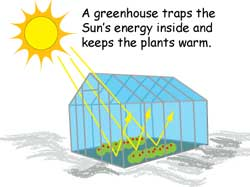 Cartoon of greenhouse. A greenhouse traps the Sun's energy inside and keeps the plants warm.