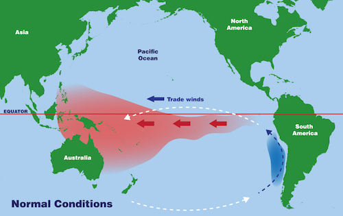 an illustrated map of the water movement in the Pacific Ocean under normal conditions