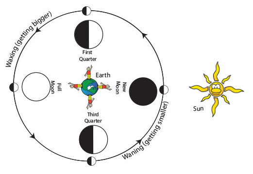 cartoon illustrating the four major phases of the moon