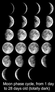 Montage of photos of Moon each night for one 28-day cycle.