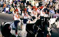 Horses in Rose Parade.